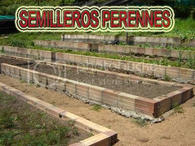 fotos-de-semilleros-perennes